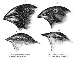 ۴ نوع از فنچهای جزایر گالاپاگوس