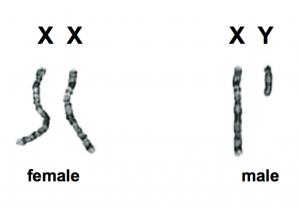 کروموزوم های تعیین جنسیت