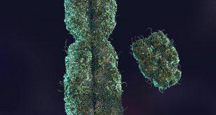 کروموزوم اکس و ایگرگ